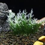 Décoration aquarium Arbre artificiel d'herbe en Figurines Miniatures poissons d'aquarium Paysage Réservoir, Taille: 11,0 x cm...