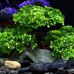 Décoration aquarium Arbre artificiel d'herbe en Figurines Miniatures poissons d'aquarium Paysage Réservoir, Taille: 24,0 x 17...