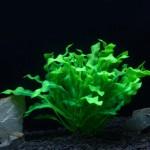 Décoration aquarium Arbre artificiel d'herbe en Figurines Miniatures poissons d'aquarium Paysage Réservoir, Taille: 22,0 x 30...